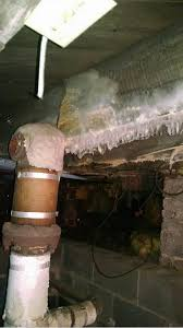 mold removal burlington