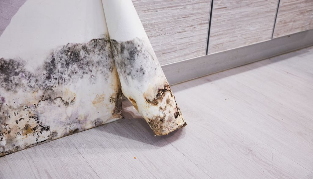 testing your business for mold will keep your employees safe and productive