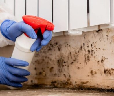 mold remediation important dos and donts you need to know
