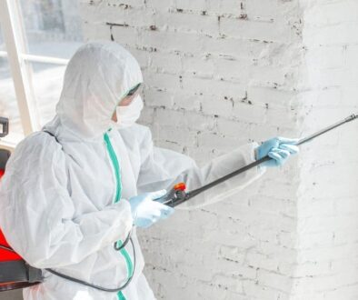 our comprehensive guide to black mold removal